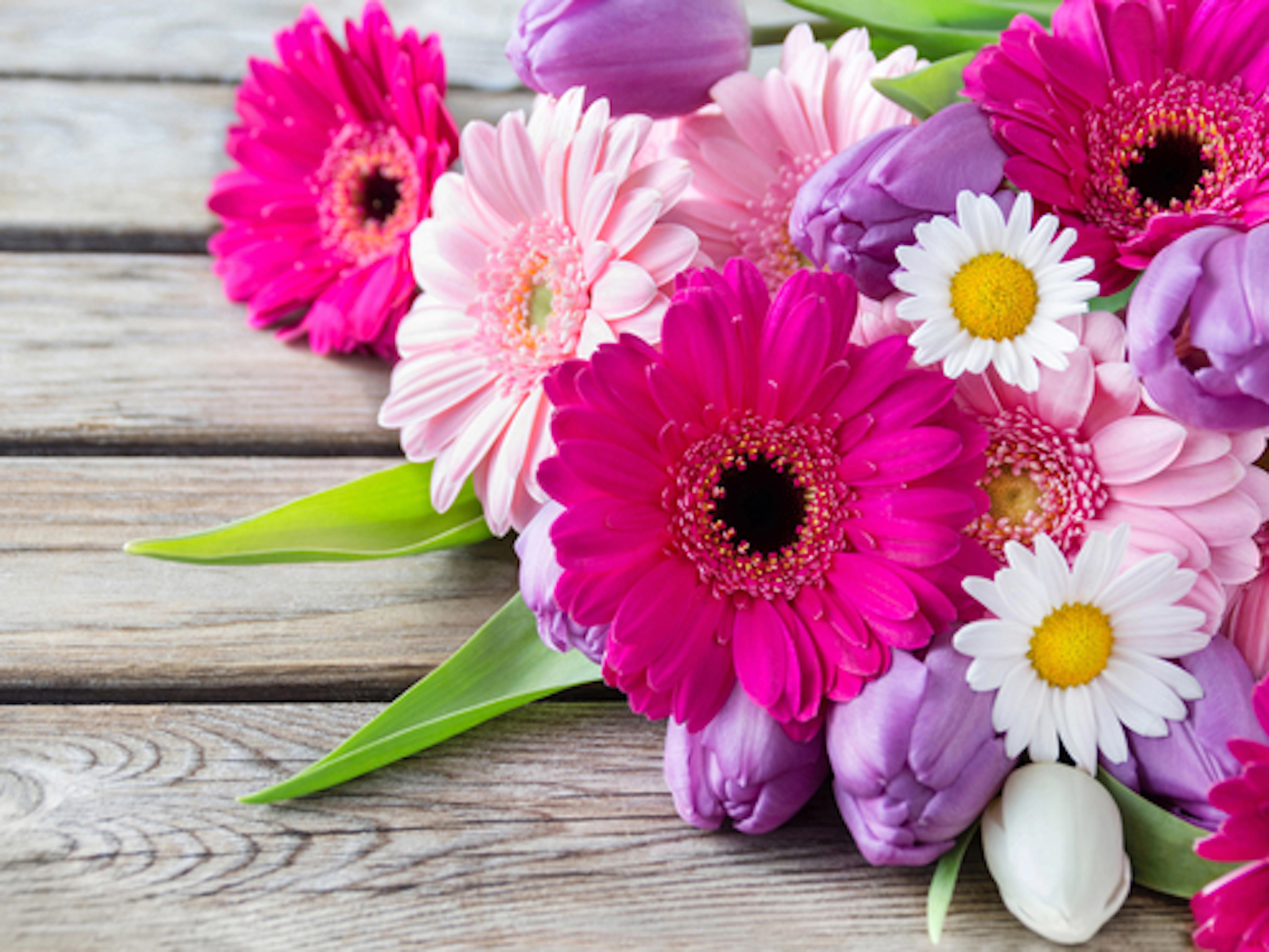 花 寄せ植え ガーベラ