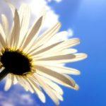 犬の花の開花の季節はいつ!?