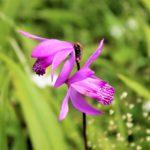 シラン(植物)の特徴について。どんな花が咲くの!?