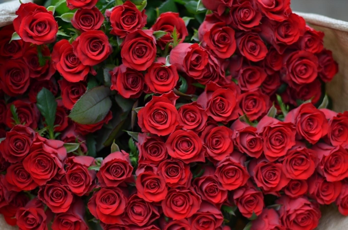 バラ 葉っぱ 赤い