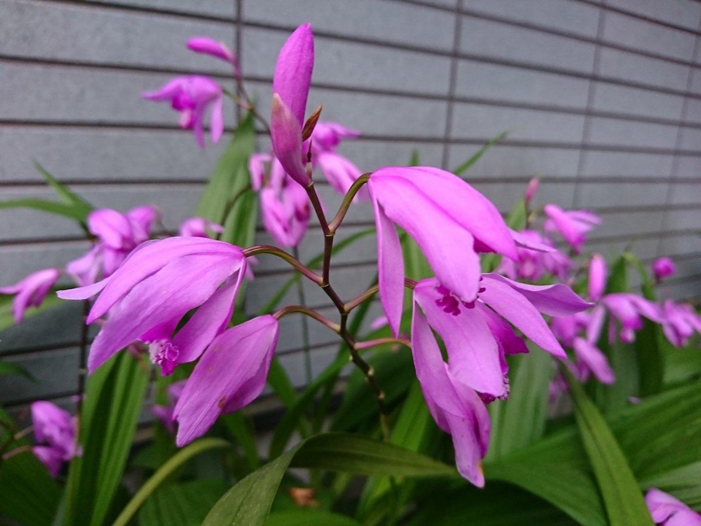 紫蘭 花 が 終わっ たら