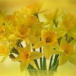 水仙の品種「ペーパーホワイト」の育て方について