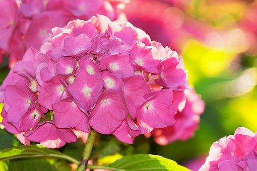 紫陽花 押し花 やり方 変色