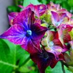 全国の紫陽花がキレイな有名なお寺をご紹介!
