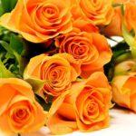 バラの花にトゲがある理由とは!?