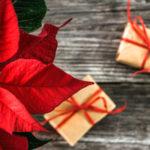 ポインセチアをクリスマスに飾った後の管理方法について