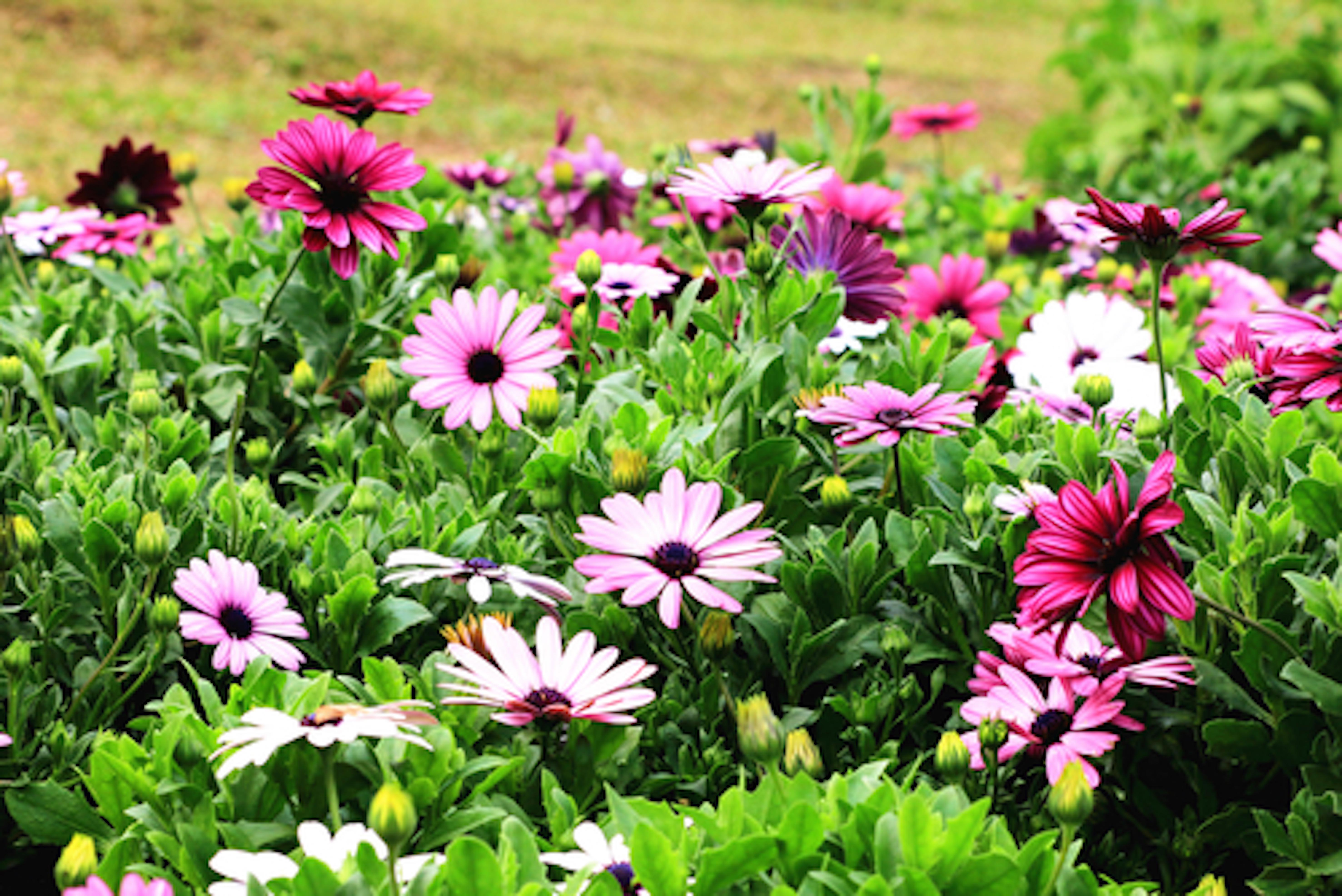 ガーベラ 花束 保存