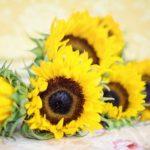 ひまわりの花言葉について。色別と本数別で違う!?