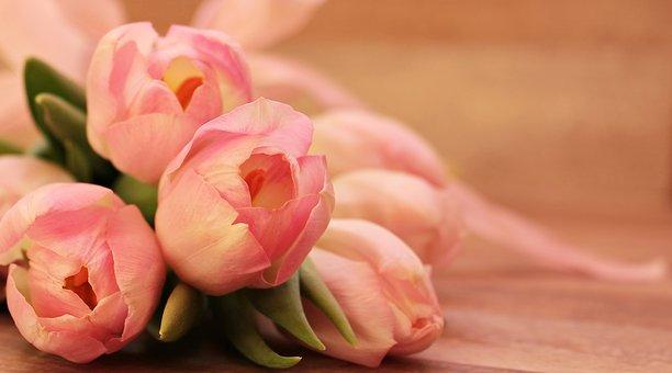 チューリップ 開花 条件