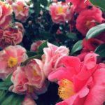 椿を育てるのに適した鉢植えの選び方。大きさはどれくらい⁉︎