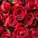 バラの大苗の適切な植え付け時期はいつになる?