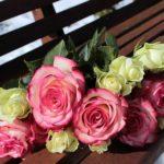 バラでお庭や壁を一工夫!バラの誘引の時期や場所について