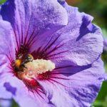 ハイビスカスの開花の時期はいつ頃?咲く条件は!?