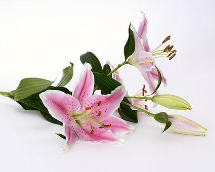 ユリ 切り花 種類