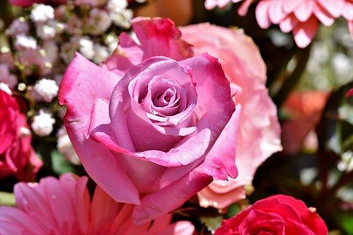 薔薇 ガブリエル 育て方