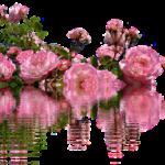 つるバラの上手な育て方やコツについて