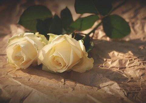 バラ イギリス 国花