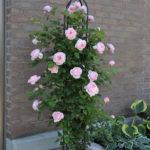 バラの栽培に合うオベリスクの選び方について