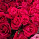 バラの品種フロリバンダの育て方について