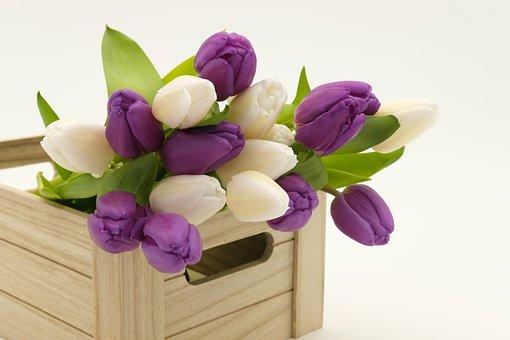 軽米 チューリップ 開花