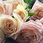 バラの花後の剪定・お手入れ方法について
