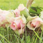 木立性バラの上手な育て方について