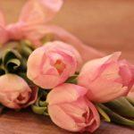 チューリップの早咲きの品種一覧!