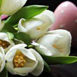 チューリップと寄せ植えの相性がいい花をご紹介!