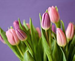 チューリップ フリンジ 咲き