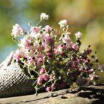 かすみ草が花屋で売られている時期や値段は!?