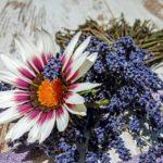 ガザニア・シルバーリーフの花は何色?特徴は?