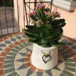 カランコエ オルギアリスは何色の花?特徴は?