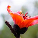 カポックの挿し木を早く成長させる育て方のコツとは?