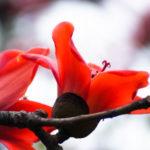 観葉植物のカポックの室内での育て方や手入れ方法のコツとは?