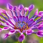 ガーベラの色別の花言葉について!