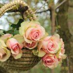 バラの花の色の変化の理由について
