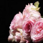 バラの地植えの方法や行う時期について