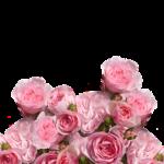 関東版!バラが綺麗なおすすめのスポットをご紹介!
