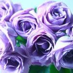 日本にあるバラの原種の種類は何!?