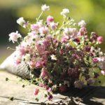 かすみ草の押し花の簡単な作り方について