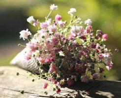 押し花 作り方 カスミソウ