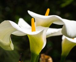 カラー 増やし方 花