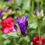 かたくりの里の開花時期はいつ頃の季節?