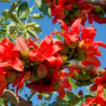 観葉植物のカポックの屋外での育て方や手入れ方法のコツとは?